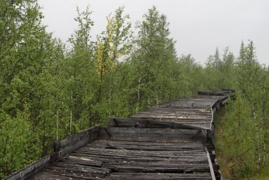 гнилая древесина