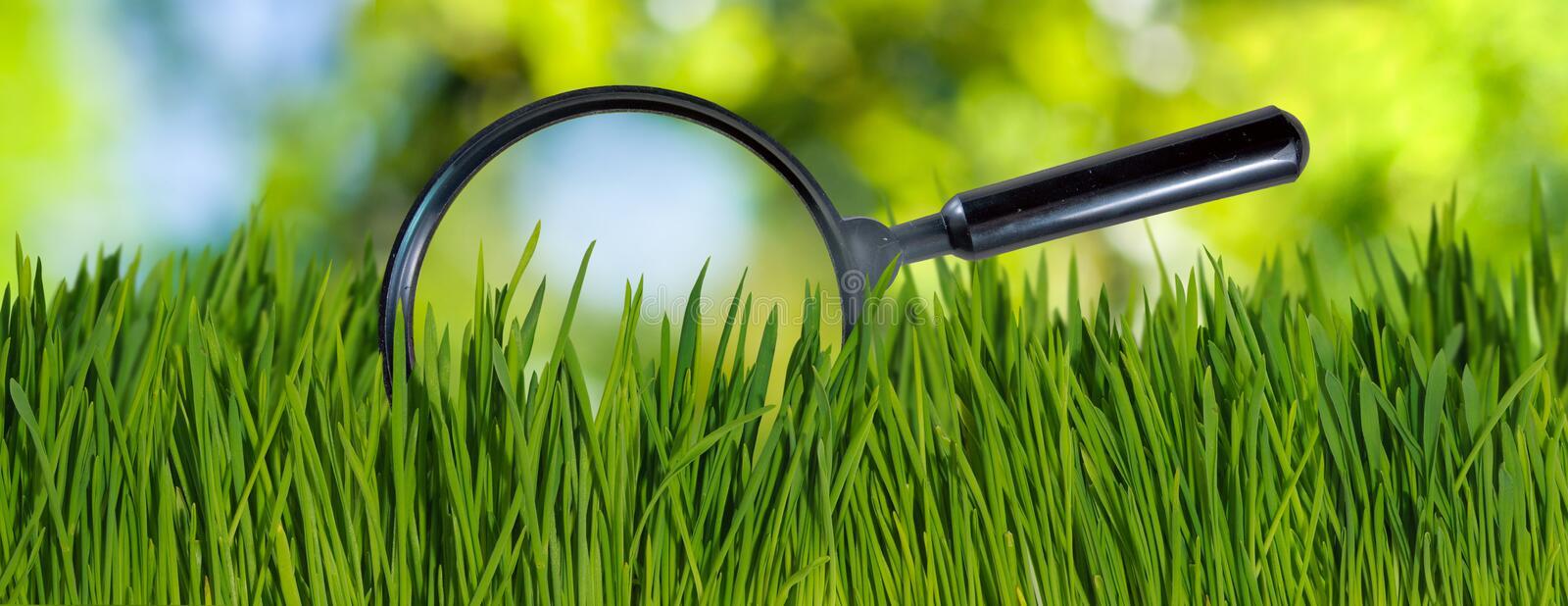 Газонная трава DLF: неприхотливые сорта для климата Казахстана, почему стал популярен белый клевер, и что сажать на спортивной площадке